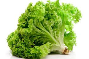 Как хранить листовой салат в холодильнике, чтобы он был свежим