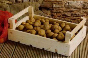 Можно ли хранить сырую картошку в холодильнике