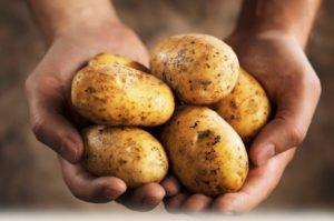 Правила хранения картофеля в домашних условиях