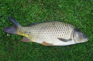 Сколько времени можно хранить разную рыбу в морозилке