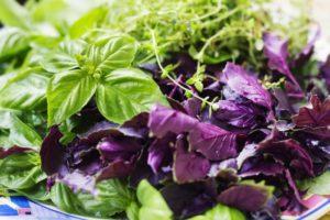 Как правильно хранить базилик в домашних условиях